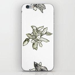 Quercus (big) iPhone Skin