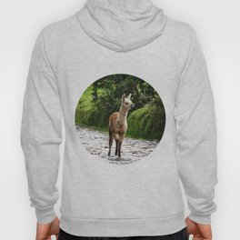 Llama 02 Hoody
