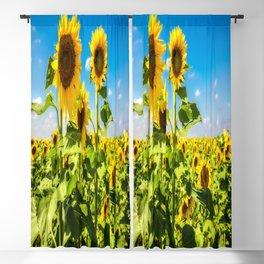Three's Company - Trio of Sunflowers in Kansas Blackout Curtain