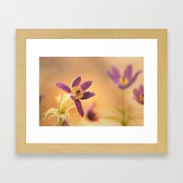 Fine Flower in Detail  Framed Art Print