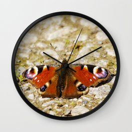 Peacock butterfly resting on a path Wall Clock