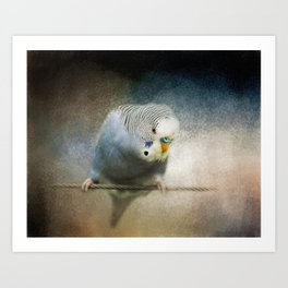 The Budgie Collection - Budgie 3 Art Print