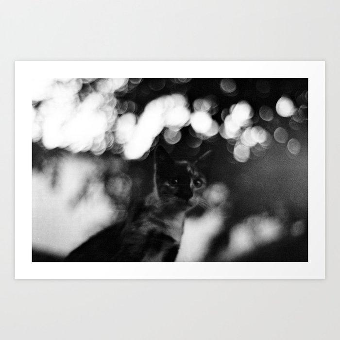 blurry cat Art Print