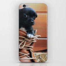 Teddy.  iPhone & iPod Skin