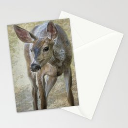 Doe Timidly Moving Past Stationery Cards