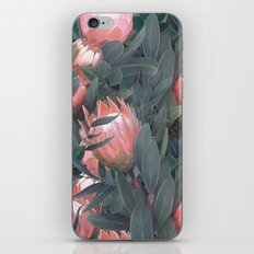 Proteas party iPhone & iPod Skin
