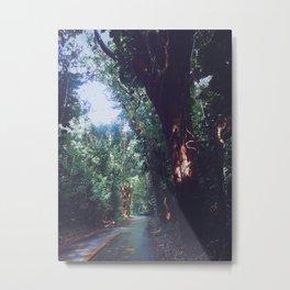 Rainforest Road Metal Print