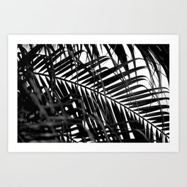Tropical Darkroom #257 Art Print