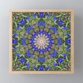 Peacock colors botanical kaleidoscope, mandala - Anagallis, Blue pimpernel flowers Framed Mini Art Print