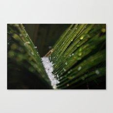 Snowy Palms Canvas Print