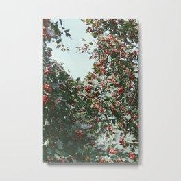 Hawthorn Metal Print