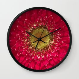 Rosy Red Gerbera Daisy Wall Clock