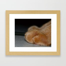 Take a Paws Framed Art Print