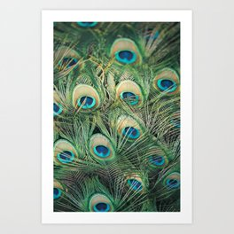Loads of feathers Art Print