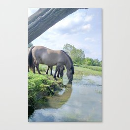 Drinking horses Canvas Print