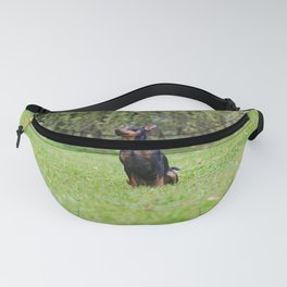 Outdoor portrait of a red miniature pinscher dog sitting on the grass Fanny Pack