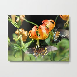 Turk's Cap Lily and Butterflies Metal Print