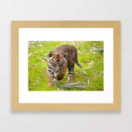Tiger Cub on the Move Framed Art Print
