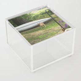 Curious Spotted Fawn Acrylic Box