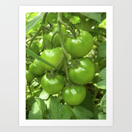 green tomato II Art Print