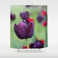 tulips Shower Curtains featuring Tulips by AlejandraClick