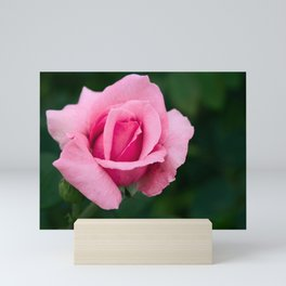 Pink Rose Flower Mini Art Print
