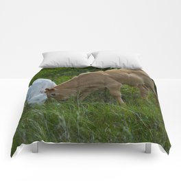 Sibling Rivalry Comforters