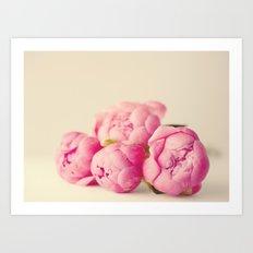 Blush Peonies  Art Print