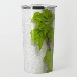 Wisteria plant climbing white plastered wall Travel Mug