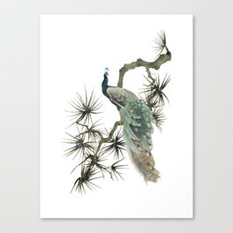 Turquoise Peacock Canvas Print