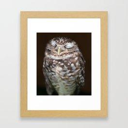 Sleeping Owl Framed Art Print