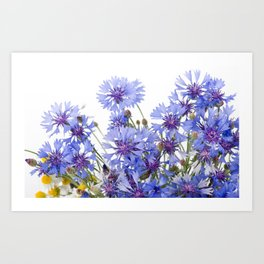 Cornflower and chamomile many flowers Art Print