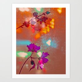 Cosmea in colorfull light Art Print