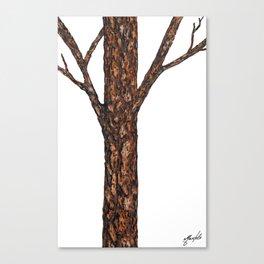 Timbeland Canvas Print