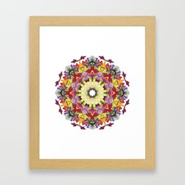 Abundantly colorful orchid mandala 1 Framed Art Print