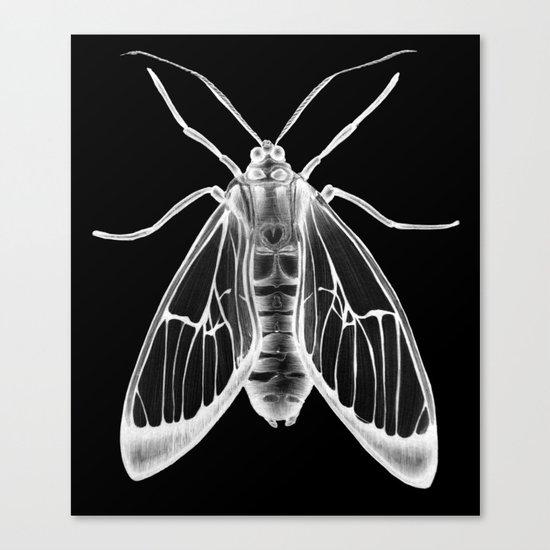 Wasp Moth II Canvas Print
