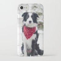 border collie iPhone & iPod Cases featuring Snow Border Collie by MelissaLaDouxPhoto