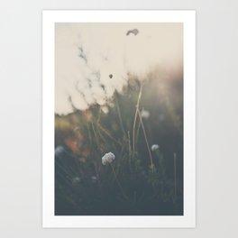 buckwheat ... Art Print