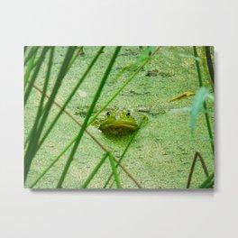 frog friend Metal Print