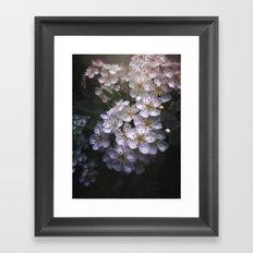 Hawthorn Blossoms Framed Art Print