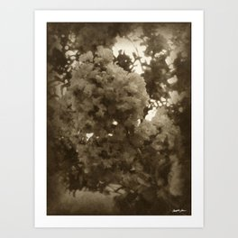 Crape Myrtle Antiqued Art Print