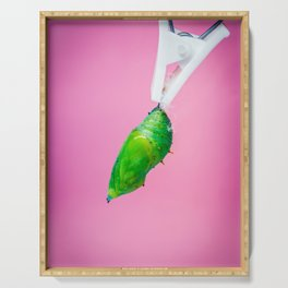 A green pupa of the tropical butterfly over pink background. Serving Tray
