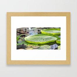 Giant Waterlily Framed Art Print