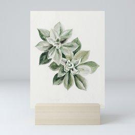 Sedum Succulents Mini Art Print