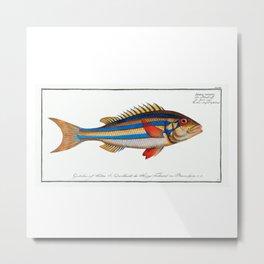 Blue-striped Gilt-head (Sparus vittatus) Illustrated Fish Chart from Ichtylogie, ou Histoire naturelle Metal Print
