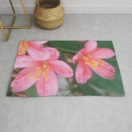 Key West Pink Rug