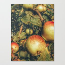 Apple taters Canvas Print