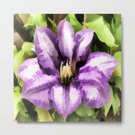 Painted Purple Flower - Clematis Metal Print