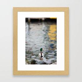 Duck standing on a rock Framed Art Print
