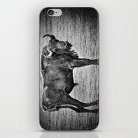 buffalo iPhone & iPod Skins featuring Buffalo by davehare